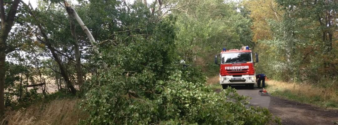 Abgeknickter Baum blockiert Wirtschaftsweg